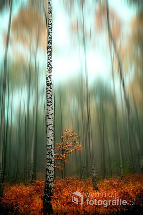 Jesienny leśny kadr.
