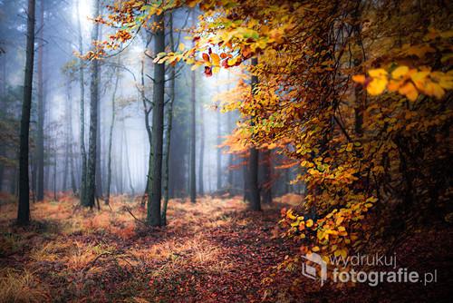 Jesienny kadr z Lasów Pszczyńskich