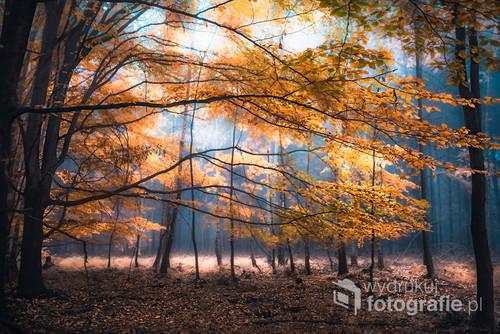 Lasy Pszczyńskie jesienią