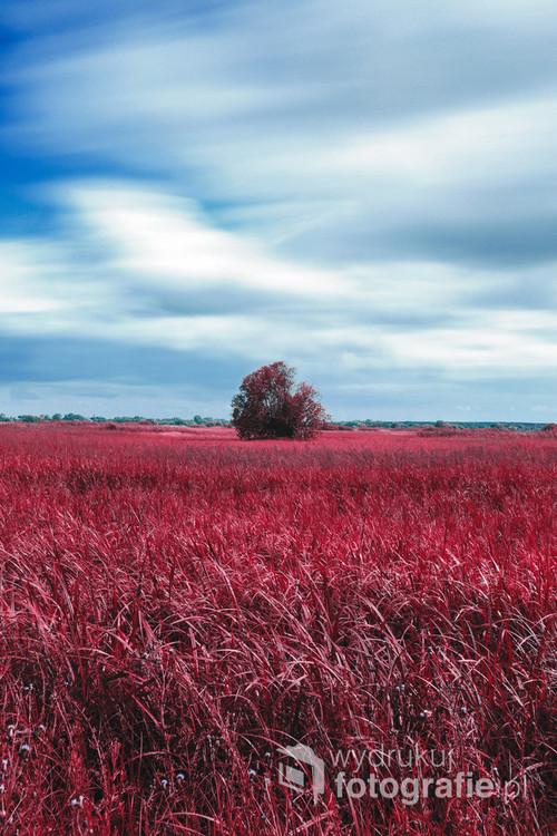 Niecodzienna fotografia, gdzie do uzyskania takich rezultatów skomponowałem własną paletę kolorów w aparacie która nosi nazwę