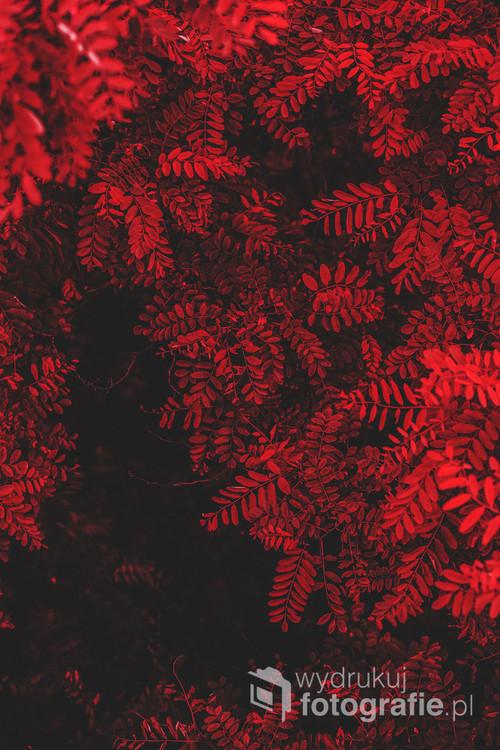 Fotografia z serii Red World. Własnoręcznie skomponowana paleta kolorów ukazuje świat natury w kolorach czerwieni. Akurat to zdjęcie jest nieco mroczne, posiada głębie, widać poszczególne warstwy . Może kojarzyć się z ciemnią fotograficzną. ;)