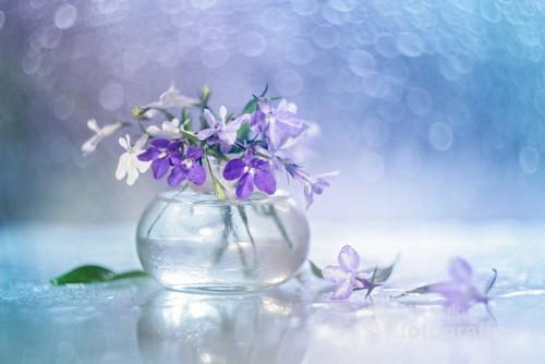Kwiaty lobelii