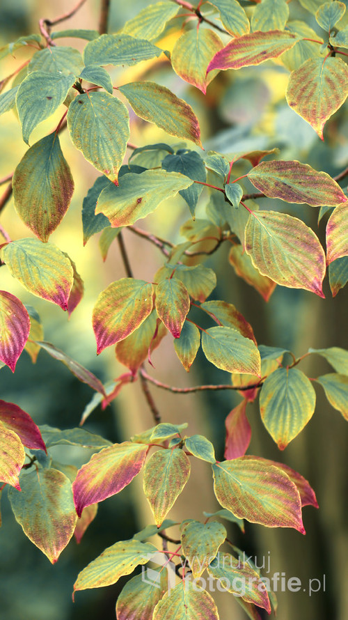 Wczesną jesienią ...