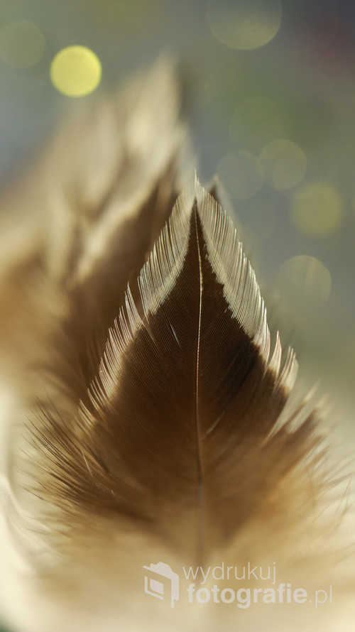 Piórka naturalne