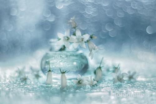 Biała dzwonki campanuli