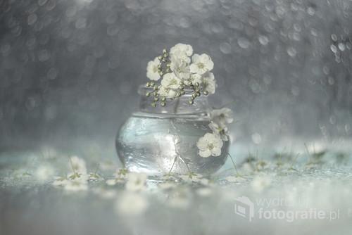 Kwiaty tawuły japońskiej w wazoniku