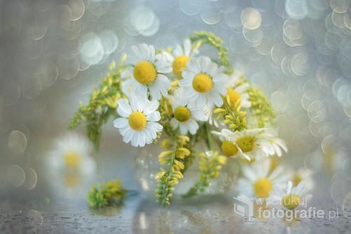 Bukiecik kwiatów polnych