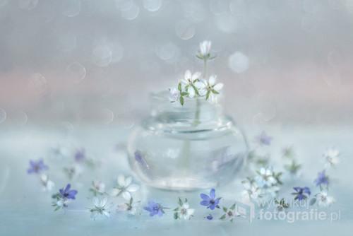 Maleńkie kwiaty iglicy pospolitej