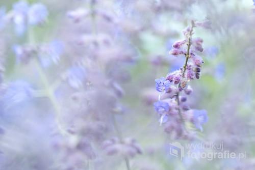 Gałązka z niebieskim kwiatkiem