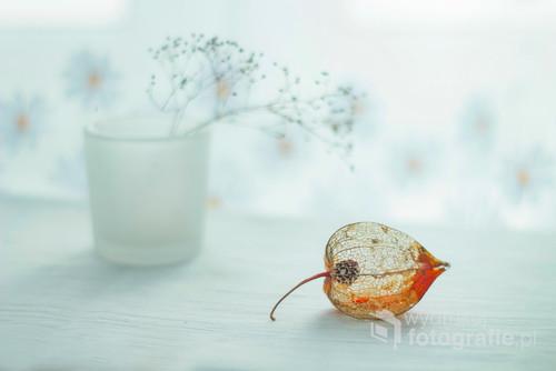 Sucha roślina i wazonik