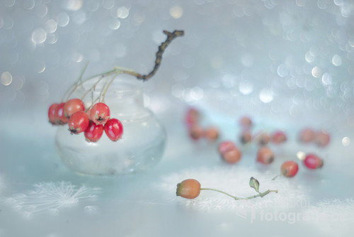 Czerwone owoce głogu