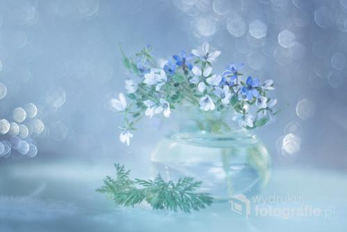 ... Z białych i niebieskich kwiatów iglicy pospolitej