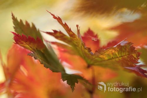 Jesienne liście i pajączek