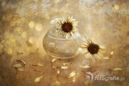 ... Z suchych kwiatów ...