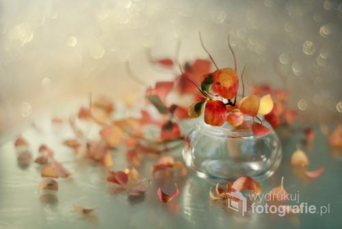 czerwone liście tawuły
