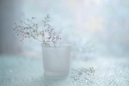 Zimowe kompozycje