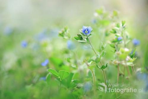 Wiosna w trawie ...