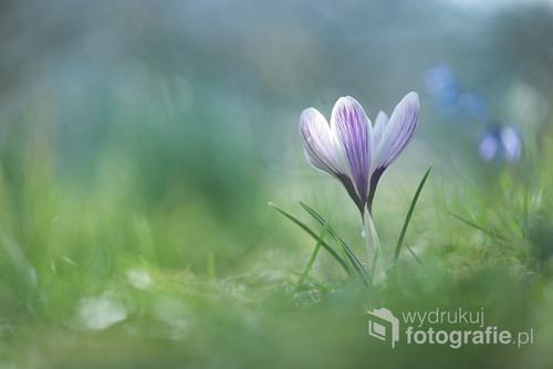 Wiosna w ogrodzie ...