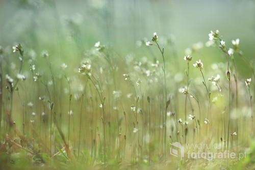 Drobne kwiatuszki w trawie ...