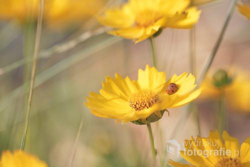 ... i kwiaty nachyłka ...
