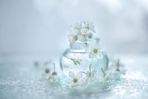 Kwiaty mirabelki ...