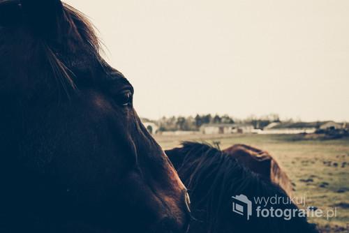 Zdjęcie zostało zrobione niedaleko miejscowości Świdwin, woj. zachodniopomorskie. Na zdjęciu przedstawione są konię biegające wolno po zagrodzie.