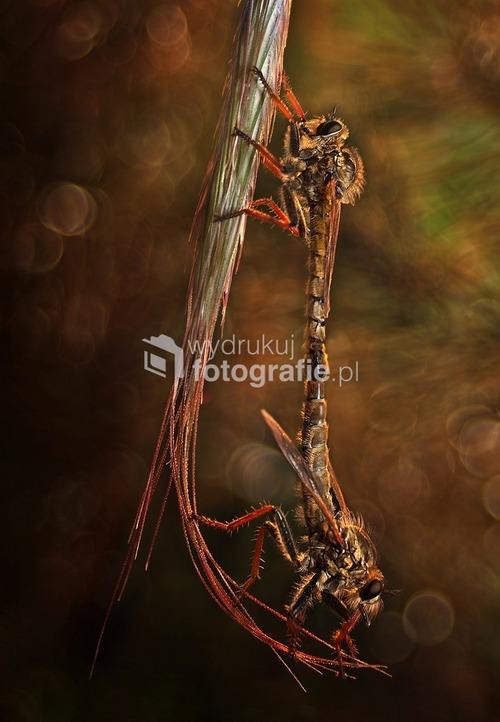 Zdjęcie nominowane na 8 WKF National Geographic Polska 2012