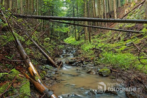 Fotografia wykonana w deszczowy, letni dzień w Beskidzie Żywieckim.