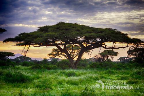 Idzie noc. Park Narodowy Amboseli, Kenia, grudzień 2014.