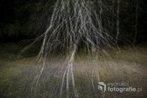 Złota polska jesień Fotomontaż z kilkunastu fotografii.