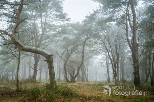 Na takie warunki czekałem od kilku miesięcy. Tu gdzie mieszkam mgły w ciągu dnia zdarzają się sporadycznie. Podczas spaceru trafiłem na mały, rzadko zarośnięty lasek i zafascynowały mnie powyginane drzewa. Powietrze stało, siąpił tylko lekki deszcz....
