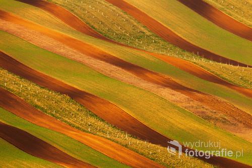 Magicznie pofalowane bio pasy ekologiczne pośród morawskich pól. Fotografia zdobyła główną nagrodę IX Międzynarodowego Festiwalu Fotografii i Filmu Przyrodniczego