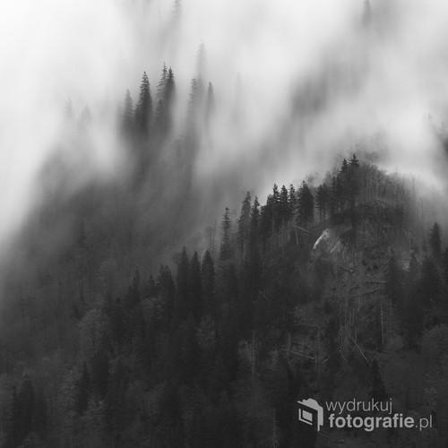 Las w słowackiej Małej Fatrze, skąpany w porannej mgle.