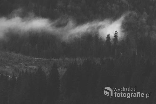 Las w słowackich Tatrach Bielskich