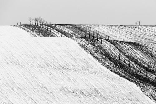 Pośród pól w czeskich Morawach.