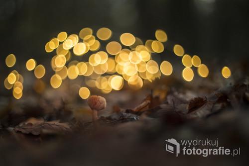 Mały jesienny grzybek w magicznym lesie...