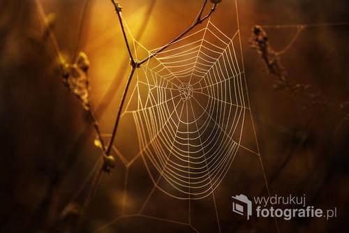Pajęczyny o poranku to mój ulubiony temat, choć pająków nie lubię i raczej się ich boję...