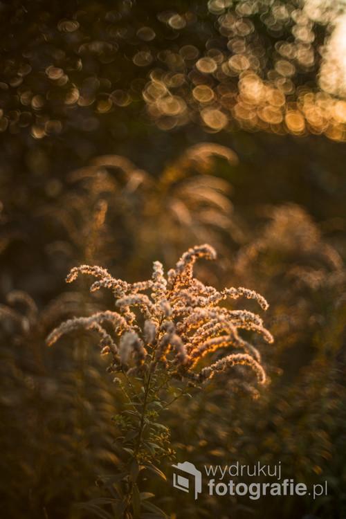 Późna jesień to ciepłe barwy i miękkie światło, które trzeba chwytać szybko, gdy dni stają się coraz krótsze...