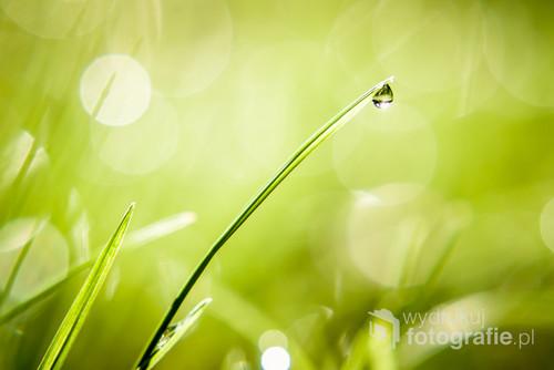 Mała kropla przyciąga uwagę, wycisza i poprawia nastrój.