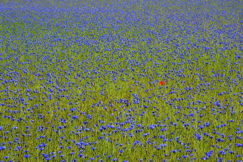 Warmińska łąka