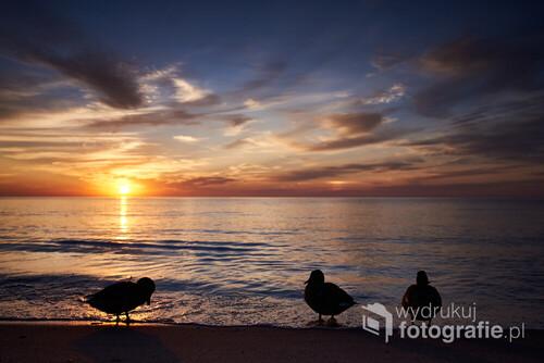 Natura obdarza nas pięknymi barwami, do których chcemy wracać. Zachód słońca nad Morzem Bałtyckim to spektakl, który można oglądać codziennie. Dodatkowo można spotkać miłe towarzystwo ;)