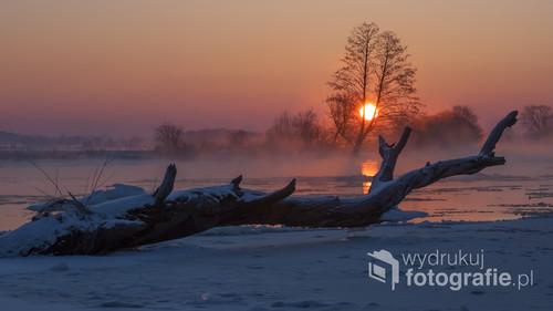 Mroźny zimowy poranek nad Narwią. Fotografia powstała po wcześniejszej lokalizacji dryfującego drzewa, które utknęło na mieliźnie blisko brzegu.