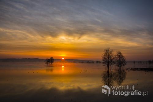 Fotografia powstała na rozlewiska rzeki Narwi w Łomżyńskim Parku Krajobrazowym. Kwiecień 2018 r.