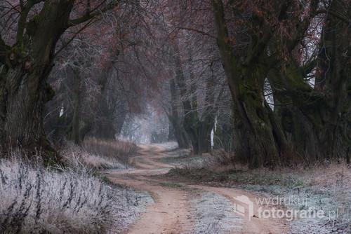 Zabytkowa Aleja Lipowa. Droga w zasadzie polna i stare ponad stuletnie lipy to miejsce w woj. Podlaskim,   które bardzo często odwiedzam i fotografuję w różnych porach roku i różnych warunkach pogodowych.