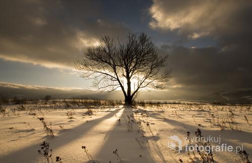 Samotne drzewo na tle zachodzącego słońca. Podhale Zimą