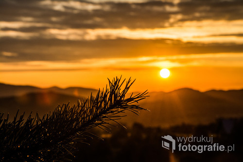 Fotografia została wykonana pod koniec pięknego upalnego dnia Sierpnia w Stryszowie (Beskid-Mały)