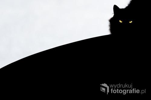 2016, Norwegia. Kot grzejący się na dachu samochodu. Zdjęcie miesiąca portalu fotoik.pl, oraz wyróżnione na portalu 1x.com
