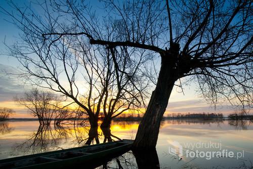 Biebrza, pychówki i drzewa o świcie