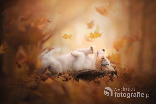 Szczeniak rasy border collie cieszący się urokami złotej jesieni.