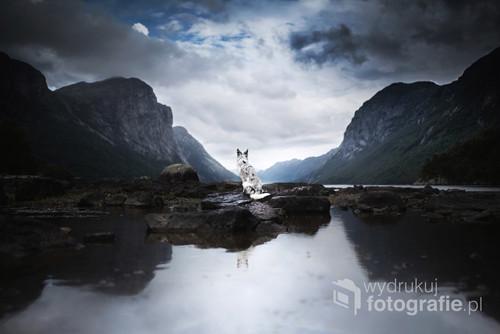 Pies rasy Border Collie w Norwegii  Zdjęcie to jest częścią autorskiego projektu Craving Miracles przedstawiającego pełne emocji portrety psów w połączeniu z niesamowitymi krajobrazami i potęgą natury, m.in. Islandii, Alaski oraz Norwegii.  Projekt ten opublikowany został w wielu magazynach fotograficznych oraz portalach i magazynach online - w Polsce oraz za granicą,  takich jak hiszpański FV Foto Video Magazine, platforma Canon Polska, National Geographic Polska, Pokochaj Fotografię, fotoblogia.pl, My Modern Metropolis, Peta Pixel.